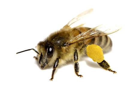 abeille-dussenne-gregory