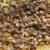 dussenne-gregory-essaims-sur-cadre-dadant3